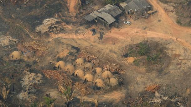 Tropischer Regenwald wird weiter zerstört