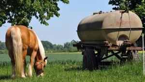 Hessische Kommune schafft Pferdesteuer ab