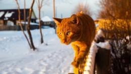 Wer will Katzen töten?