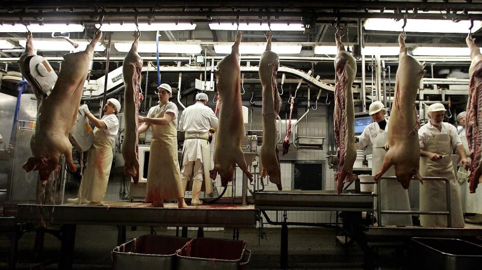 Die Arbeit im Schlachthof ist anstrengend, die Fließbänder laufen schnell: Fleischversorgungszentrum in Mannheim.