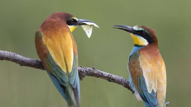 Artenvielfalt als falsche Hoffnung
