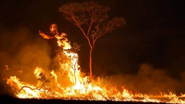 Schlimmste Juni-Brände seit 14 Jahren