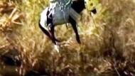 """Pferd von Sandbank """"ausgeflogen"""""""