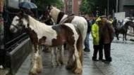 Herrenlose Pferde auf der grünen Insel