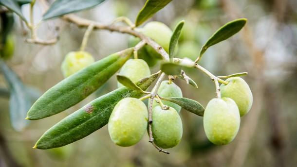 Der Preis der Oliven