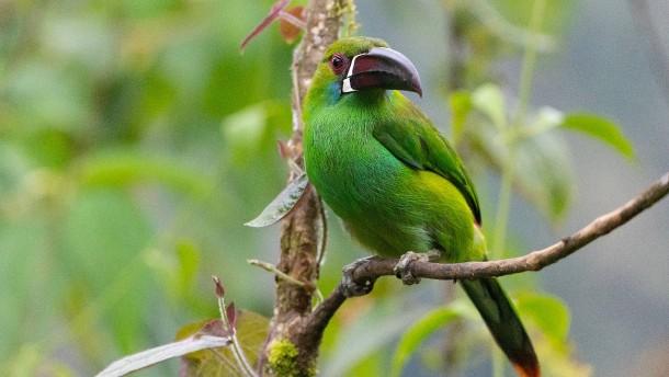 Vogelsterben gefährdet Bäume in Regenwäldern