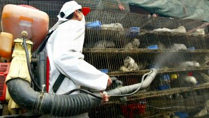 Weltbiodiversitätsrat: Risiko neuer Pandemien wächst rasant