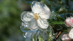 Gärtnern in Zeiten des Klimawandels
