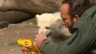 Eisbär Knut trauert um seinen Ziehvater