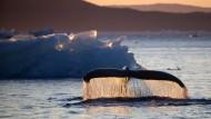 Klimaschutz braucht mehr Forscher und Erfinder