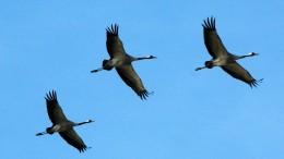 Frühe Vögel