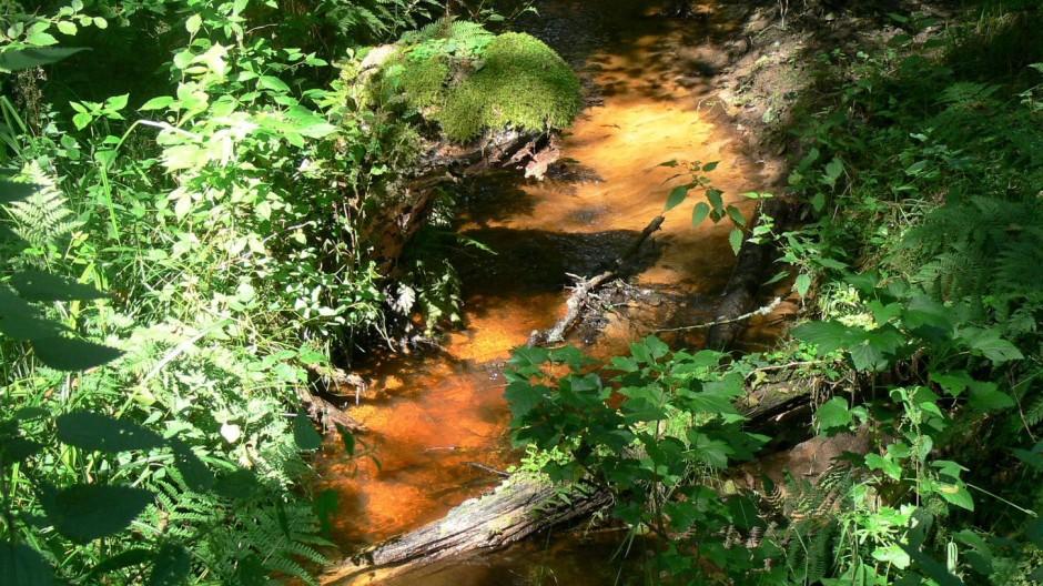 Ausgewaschene Huminsäuren gaben dem Bächlein Rotes Wasser seinen Namen.