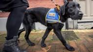 25.000 Euro für einen Hund