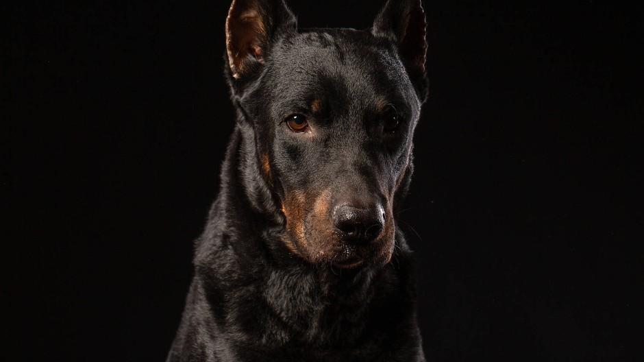 Wegschauen oder ins Auge blicken: Wer den schwarzen Hund in Schach halten will, muss sich für eine dieser Strategien entscheiden.
