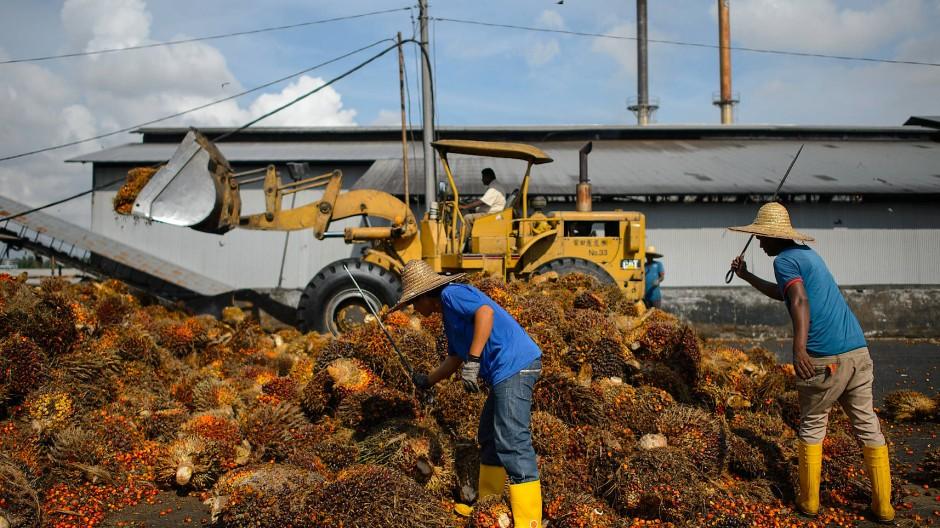 Umstrittenes Geschäft: Für Palmöl soll es bis 2022 entlang der Lieferkette keine Abholzungen mehr geben.