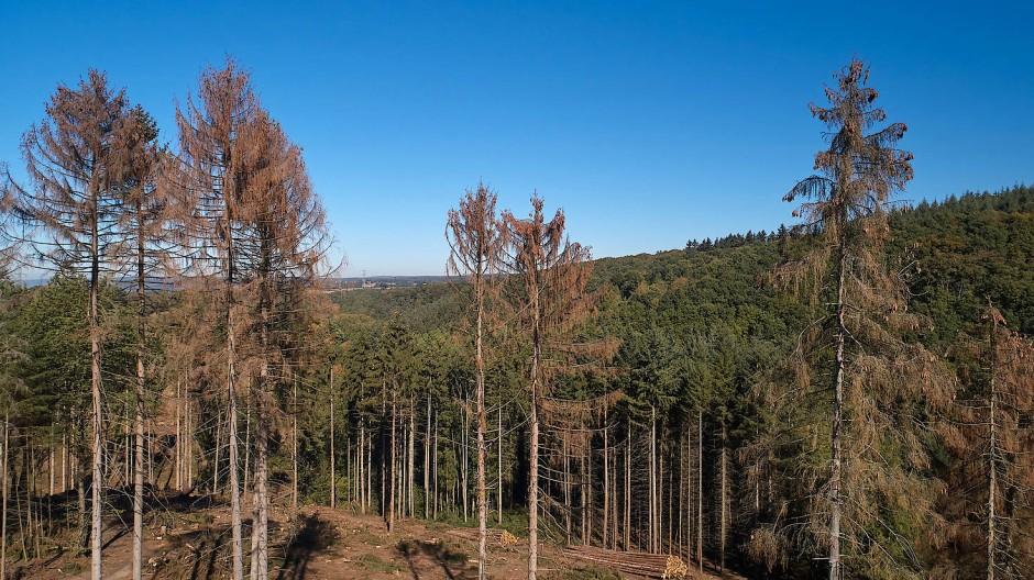 Deutsche Sommer werden immer trockener und bringen Wälder an ihre Grenzen. Dieses Jahr könnte etwas feuchter werden (Symbolbild).