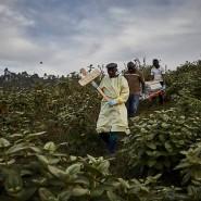 Helfer tragen einen Sarg zum Friedhof nach Butembo, Nord-Kongo.