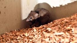 Mäuseplage macht Landwirten zu schaffen