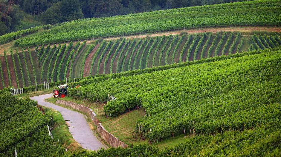 Franken oder Elsass? Wie einfach ist es wirklich, verschiedene Weine zu unterscheiden?