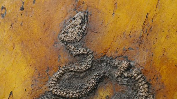 Älteste Pythonschlange der Welt entdeckt