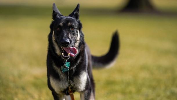 Joe Bidens Hund soll bissiger sein als bisher bekannt