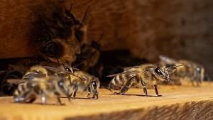 Honig von den Bundestags-Bienen