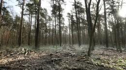 Der deutsche Wald ist krank