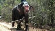 Wilder Elefant wird lammfromm