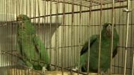 Kampf gegen Tier-Schmuggel