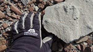 200 Millionen Jahre alter Saurier-Fußabdruck entdeckt