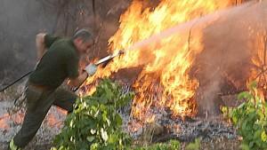 Heftige Buschfeuer wüten in Südeuropa