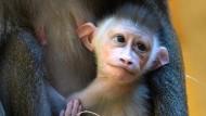 Affen-Baby verzaubert Zoobesucher