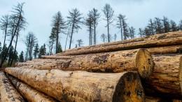 Holzpreise in Amerika sinken rapide