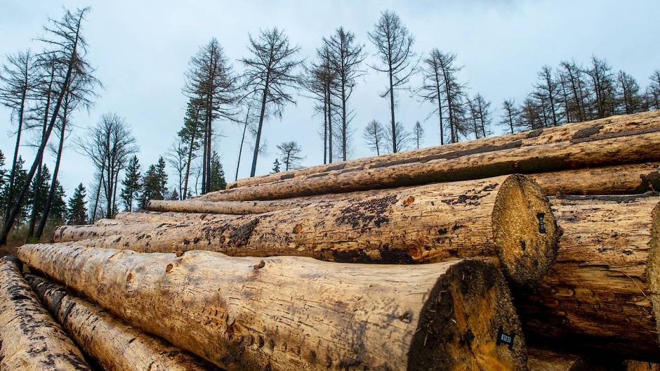 Gute Nachrichten für deutsche Hausbauer: Bauholz wird wieder billiger.
