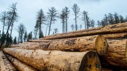 Teures Bauholz – Bundesregierung hält Maßnahmen für ausreichend