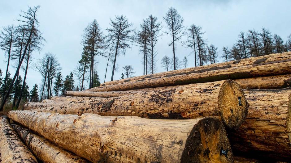 Im Harz wartet parat liegende Langholz auf den Abtransport.
