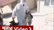 Vogelgrippe-Fälle in Türkei schüren Angst in Europa