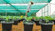 Monsanto-Treibhaus in Bangalore: Bayer erwarb den Saatguthersteller für 64 Milliarden.