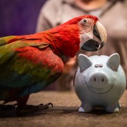 Richtiges Sparen will gelernt sein: Papagei in der Vogelburg im hessischen Weilrod