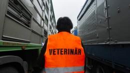 Veterinäramt entlässt Mann wegen Tierpornos