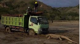 Ein Foto aus Indonesien alarmiert Umweltschützer