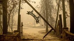 Rekordfläche wurde durch Waldbrände zerstört
