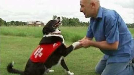 Hunde erschnüffeln Diabetes