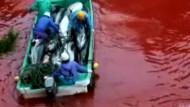 """""""Die Bucht"""" zeigt Delfin-Abschlachten"""