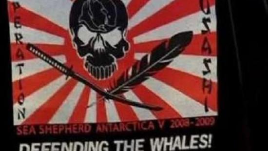 Meeresaktivisten wollen Walflotte verfolgen