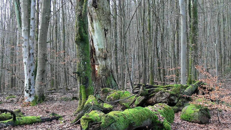 Als eines der ersten Refugien Bayerns wurde die zehn Hektar große Parzelle Rohrberg 1928 unter Naturschutz gestellt.