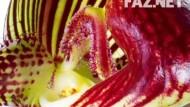 Florale Skulpturen
