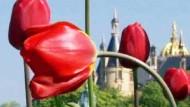 Blütenreigen in Schwerin