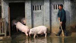 Zuerst kommt das Schweinefleisch, dann die Partei