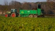 Ein Landwirtschaftlicher Lohnunternehmer fährt in Gollern, Niedersachsen Mist von Kühen auf einem Feld aus.